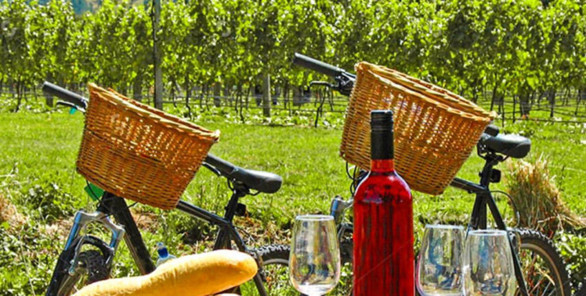 First Time Napa Valley Wine Tours